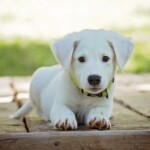 sa 1614998407 puppy 1903313 1920